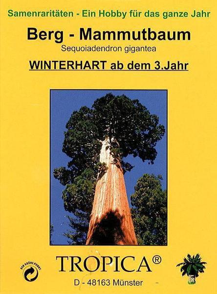 Bild von Berg-Mammutbaum (Samen)