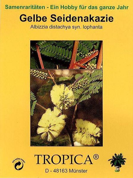 Bild von Gelbe Seidenakazie (Samen)