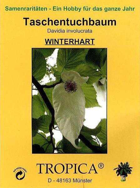 Bild von Taschentuchbaum (Samen)